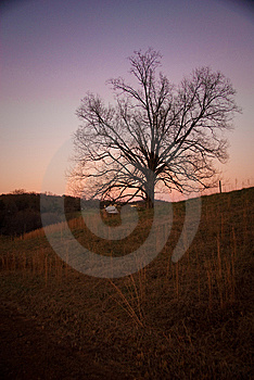 Tree At Sunset Royalty Free Stock Photos - Image: 14657068