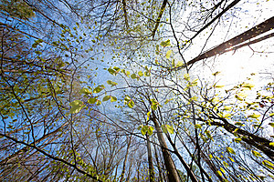 Tree Canopy Royalty Free Stock Photo - Image: 14657105