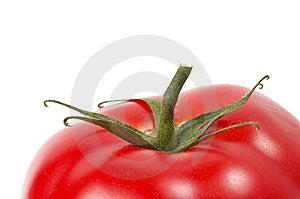 One Tomato Stock Image - Image: 14659401