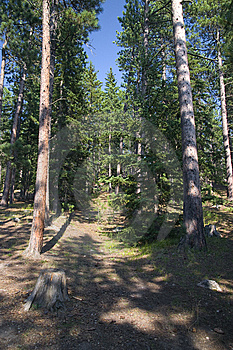 A West Coast Forest Dense Stock Photo - Image: 14659680