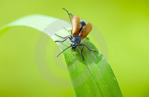Insect On Leaf Stock Image - Image: 14660141