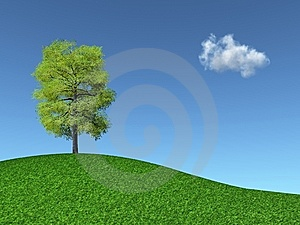 Tree On A Grassy Hill Royalty Free Stock Photography - Image: 14663147