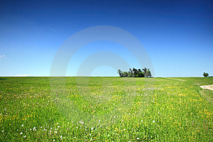 Field With Hewed Corn And Clouds Royalty Free Stock Photos - Image: 14663958