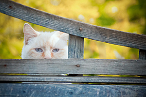 Blue Eyes Royalty Free Stock Photography - Image: 14667517