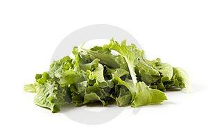 Green Salad Stock Image - Image: 14670421
