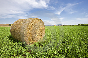 Trefoil Bale In Field Royalty Free Stock Photo - Image: 14672145