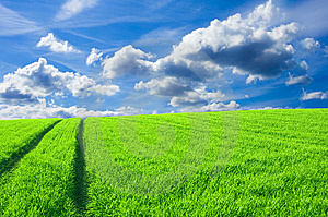 Green Field And Blue Sky Conceptual Image. Royalty Free Stock Photography - Image: 14672327