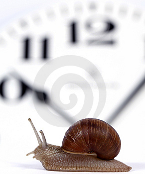 Edible Snail Royalty Free Stock Photography - Image: 14674627