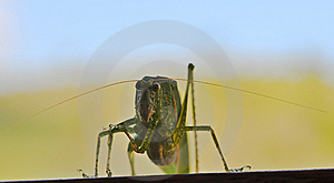 Leaf Insect Royalty Free Stock Images - Image: 14675339