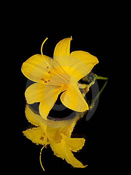 Yellow Flower Stock Images - Image: 14677744