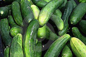 Cucumbers On Display Stock Photo - Image: 14679680
