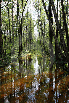 Pond In The Forest Royalty Free Stock Photography - Image: 14689077