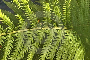 Fern Stock Images - Image: 14693854