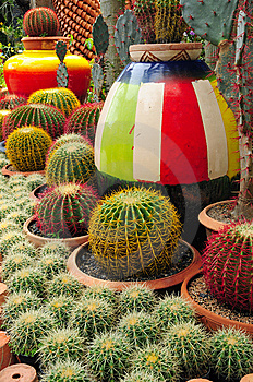 Cactuses Royalty Free Stock Photos - Image: 14695388