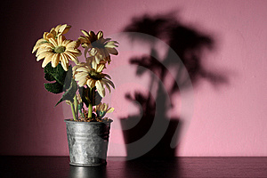 Flowers In A Pink Room Royalty Free Stock Photography - Image: 14696367