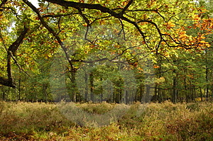 This Fall In Forest Stock Image - Image: 1477201
