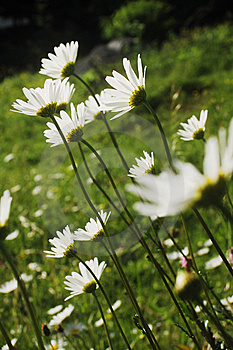 White Flowers Stock Photography - Image: 14705992