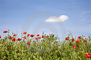 Red Poppy And The Sky Stock Photos - Image: 14719303