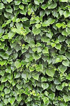 Raindrops On Leaf Royalty Free Stock Images - Image: 14720719