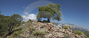Tree On The Rocky Hill Stock Image - Image: 14723661
