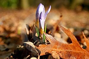 Spring Vs Autumn Royalty Free Stock Photo - Image: 14727705
