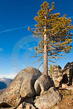 Pine And Boulders Royalty Free Stock Photos - Image: 14731378