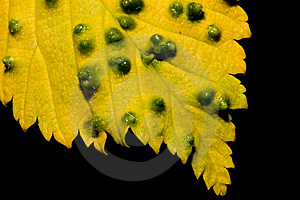 Yellow Leaf Royalty Free Stock Images - Image: 14743329