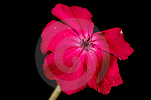 Flower Stock Images - Image: 14743404