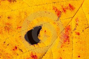 Autumn Leaf Stock Images - Image: 14743534