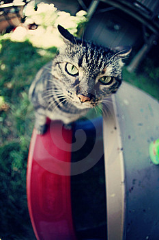 Cat On A Kid's Bench Royalty Free Stock Photography - Image: 14743547