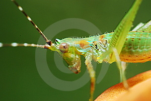 Insect Closeup Stock Image - Image: 14746671