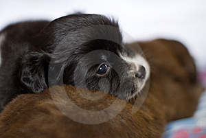 Black Dog Mammal Stock Photography - Image: 14761582