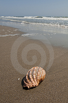The Beach Stock Image - Image: 14762411