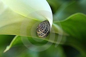 蜗牛 库存照片 - 图片: 14766430