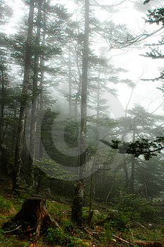 Misty Woods Stock Images - Image: 14767364