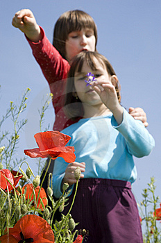 Sisters In The Corn Poppy Royalty Free Stock Photos - Image: 14767518