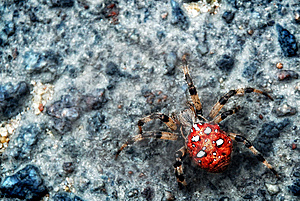 Big Spider On A Stone. Royalty Free Stock Photos - Image: 14768828