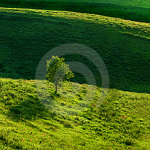 Green Meadow Royalty Free Stock Image - Image: 14770186