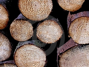 Trunks Wood Royalty Free Stock Photo - Image: 14773425