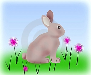 Rabbit And Flowers. Stock Photography - Image: 14775222