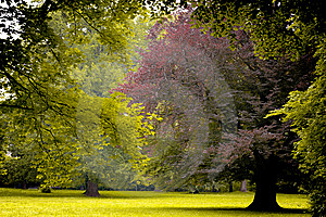 Paths In The Park Royalty Free Stock Photo - Image: 14786805