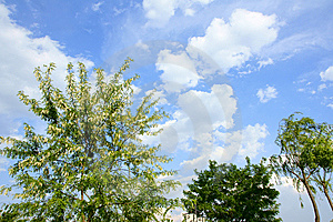 Trees And Clouds Stock Image - Image: 14790921