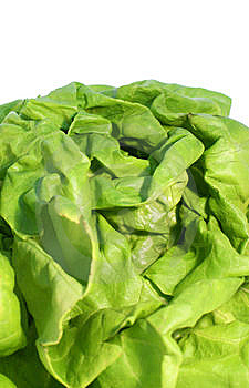 Lettuce Stock Images - Image: 14791704