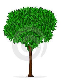 Indoor/outdoor Tree - Ficus Royalty Free Stock Photo - Image: 14794155