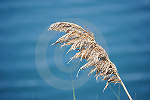 Lake Plant Royalty Free Stock Photo - Image: 14796175