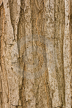 Bark Stock Photos - Image: 14799403