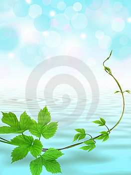 Water Background With Twig Stock Photo - Image: 14802300