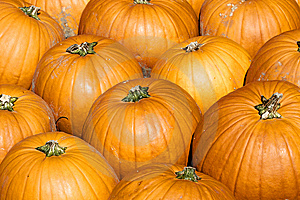 Colorful Pumpkins Royalty Free Stock Photography - Image: 14809377