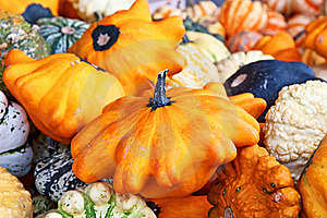 Colorful Pumpkins Stock Photos - Image: 14809803