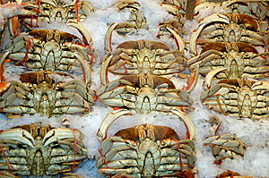 Crabs On The Ice Stock Photo - Image: 14810110